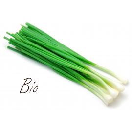 Зелен лук био